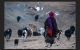Tibetan semi nomad woman heading home after rounding up the yaks