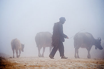 Farmer in morning mist
